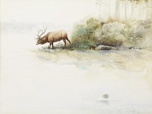 Artwork by Lissa Calvert, Elk Drinking
