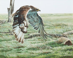 Artwork by Steve McNorton, Hawk in Flight