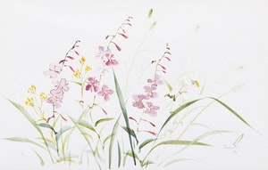 Artwork by Marjorie Pigott, Floral Studies